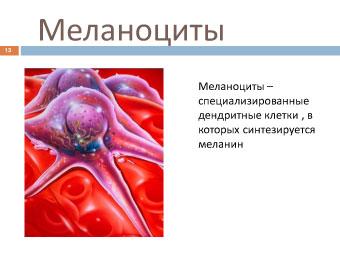 Меланома собак: меланоциты
