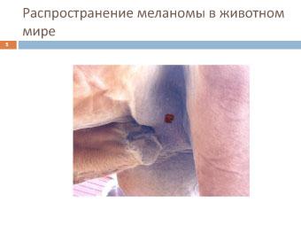 Меланома собак: распространение меланомы у животных