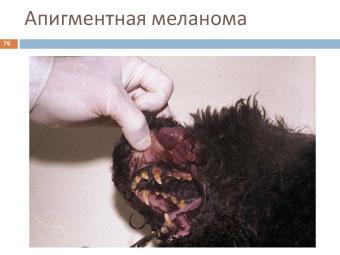 Меланома собаки: апигментная меланома
