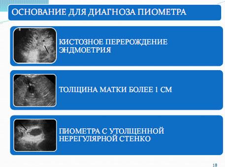 """Слайд 17. Постановка диагноза """"Пиометра"""""""