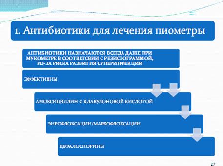 Слайд 24. Антибиотикотерапия пиометры