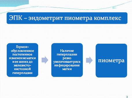Слайд 4. ЭПК, развитие пиометры