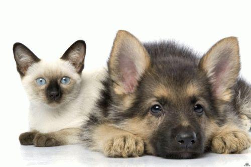 Заболевания передающиеся от собак и кошек человеку
