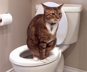 Основные причины хронической диареи у собак и кошек