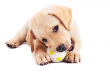 Аллергии у собак: причины, диагностика, лечение