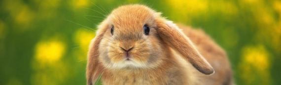 Уход и содержание кроликов. Часто задаваемые вопросы.