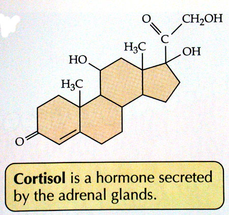 Исследуем на гормон кортизол