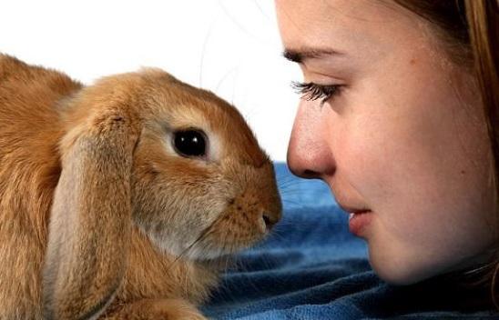 Вся правда о декоративных кроликах
