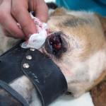 Рак третьего века у собаки