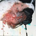 Фиброма на задней поверхности бедра у собаки. После операции