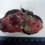 Фибросаркома в ротовой полости у собаки