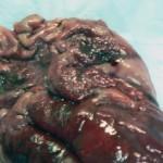 Гипертрофический язвенный гастрит, рак желудка собаки