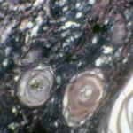 Плоскоклеточный рак у пуделя: Гистология