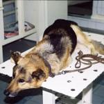 Рак желудка: Фото собаки