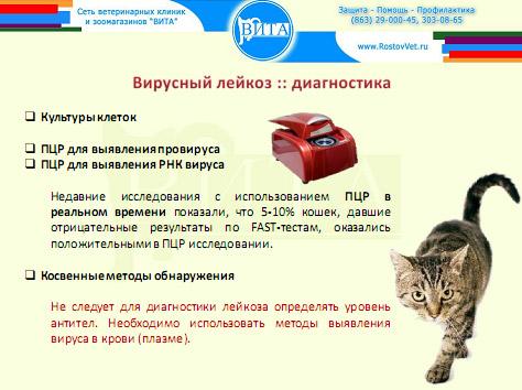 Диагностика лейкемии. Лейкоз кошек. ПЦР анализ