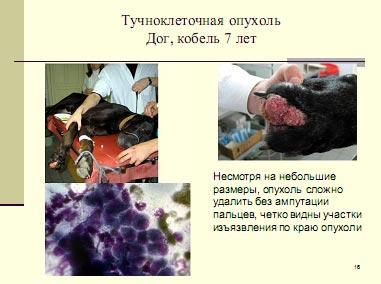 Тучноклеточная опухоль собаки (Дог, кобель, 7 лет)