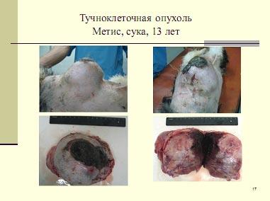 Тучноклеточная опухоль (мастоцитома) собаки