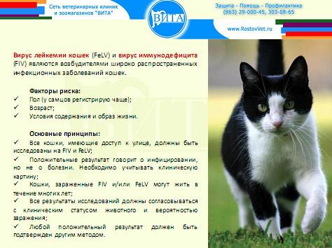 Летальные вирусные болезни кошек