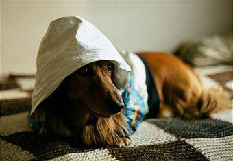 Как измерить температуру у собаки?