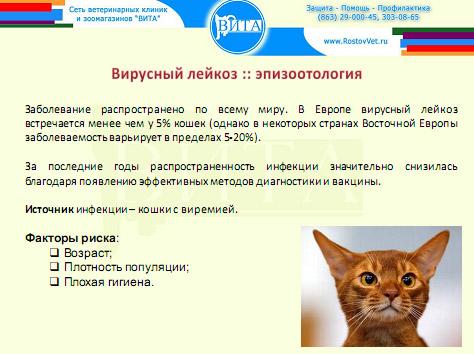 Заражение лейкозом кошек