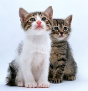 Токсоплазмоз у кошек и собак: симптомы, диагностика, профилактика
