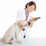 хламидиоз, инфекционный аборт собак, животных chlamydia abortus