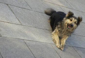 Клостридиоз собак