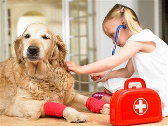 Гепатозооноз собак, Hepatozoon canis, заболевание крови собак, паразитарные болезни собак
