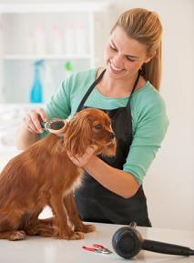 Ротовирусная инфекция собак (Rotovirosis)