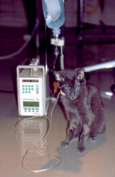 токсоплазмоз фото у кошки фото