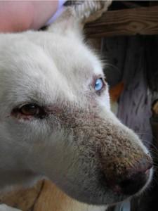 Дефицит цинка у собаки
