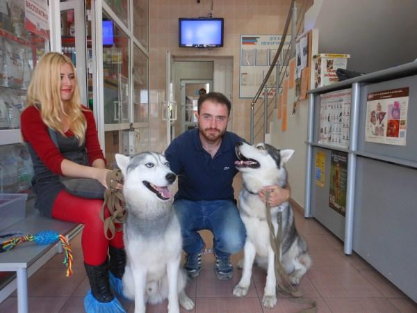 наши клиенты с собаками хаски