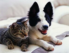 Токсоплазмоз у собак и кошек