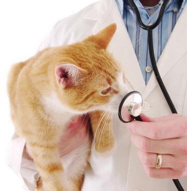 Кошки и токсоплазмоз