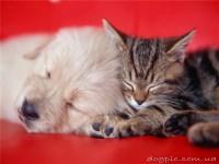 Наркотизация животного: кошки, собаки (длительность 15-20 минут).