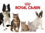 Акция снижение цены на продукцию Royal Canin!